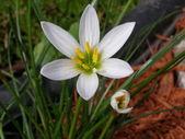 Цветок — Foto de Stock