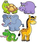 Coleção de animais da africa 4 — Vetorial Stock