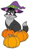 Cat with hat and pumpkins — Stock Vector