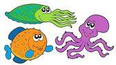 Marine species collection — Stock Vector