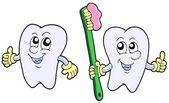 Pair of cartoon teeth — Stock Vector
