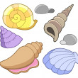 Sea shells collection — Stock Vector