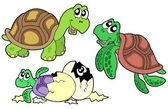 Turtles collection — Stock Vector