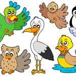 söta fåglar samling 2 — Stockvektor