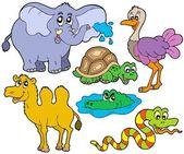 Tropical animals collection — Stock Vector