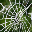 Winter frost on spider web — Stock Photo