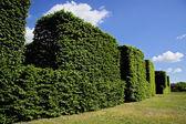 Hedge against blue sky. — Stock Photo