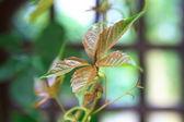 Leaf in the rain — Stock Photo