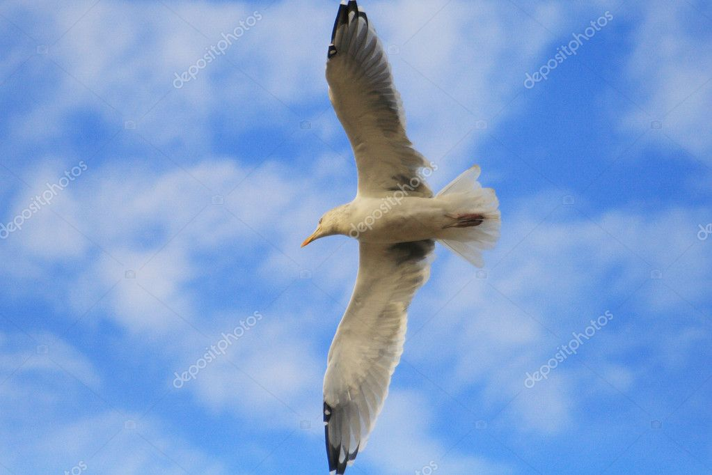 Flight of seagull — Stock Photo #1860546
