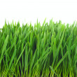 Stock Photo: Grass isolated