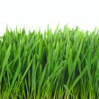 Royalty-Free Stock Photo: Grass isolated