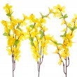 Forsythia Flowers — Stock Photo #1908739