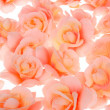 Pink flowers — Stock Photo #1908775