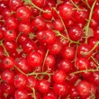 Red currant — Stock Photo #1909536