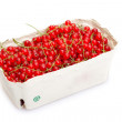 Red Currant — Stock Photo #1911069