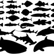 Fish vector set — Stockvektor