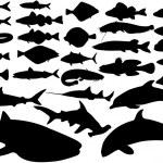 Fish vector set — Stock Vector