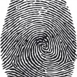 Stock Vector: Fingerprint-vector