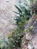Exotic plants — Stock Photo