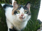 Cat portrait — Stock Photo