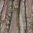 Bark texture — Stock Photo #2453190