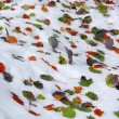 Leaf on snow — Stock Photo