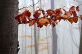 The branch of hornbeam with autumn leave — Stock Photo
