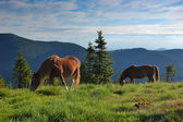 Horses on a pasture — Stock Photo