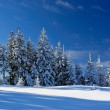 winterlandschap — Stockfoto #2416305