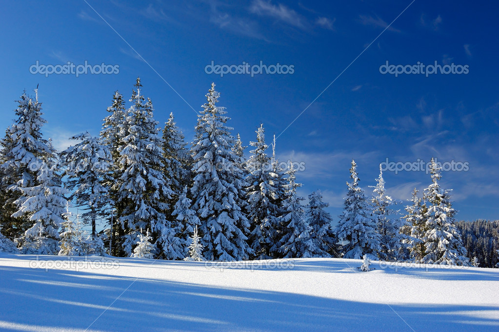 Mountains Carpathians, Ukraine, a mountain valley Pogarsky. Winter. — Stock Photo #2416305
