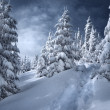 Winter landscape — Stock Photo #2504133