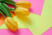 Tulipes jaunes — Photo