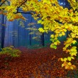 Stock Photo: Autumn in wood