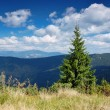 Summer mountain landscape — Stock Photo #2538975
