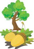 The acorns — Stock Vector