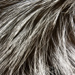 Stock Photo: Fur of silver fox