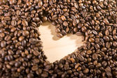 Close up of coffee beans — Stock Photo