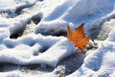 Leaf in snow — Stock Photo