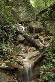 Lesní potok — Stock fotografie