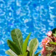 By the pool — Stock Photo