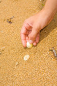 Pick up the shells — Stock Photo