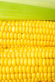 Maize close up — Stock Photo
