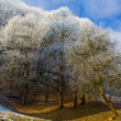 Trees covered with rime — Stock Photo #2083864