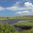 Stock Photo: Salt Marsh