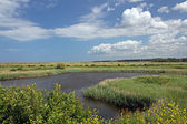 Salt Marsh — Stock Photo