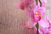 Orchid behind the stained glass — Stock Photo