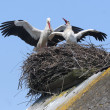 Stock Photo: Storks in nest on roof