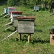 Several beehives at green grass — Stock Photo #1956626