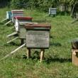Several beehives at green grass — Stock Photo #1956626