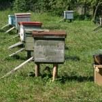 Several beehives at green grass — Stock Photo
